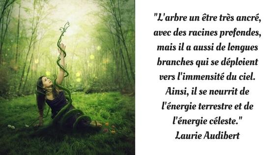 L'arbre est un être ancré / Laurie Audibert / Coach Holistique