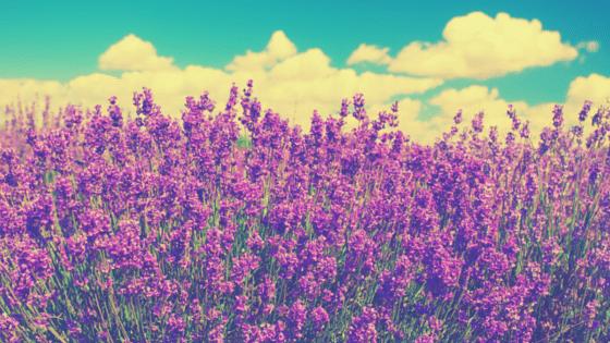 Couleur violette-chromothérapie