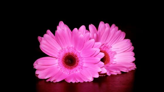 couleur rose-Chromothérapie