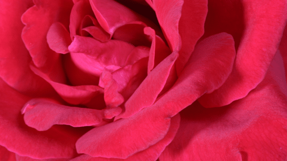 couleur rouge-chromothérapie