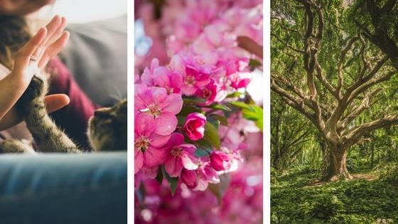 10 façons de se reconnecter à la nature / Laurie Audibert / Coach Holistique