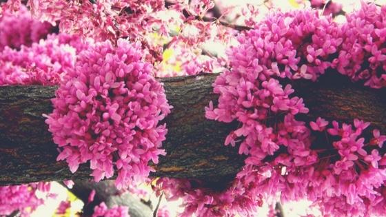 10 manières de vous reconnecter à la nature / Laurie Audibert / Coach Holistique