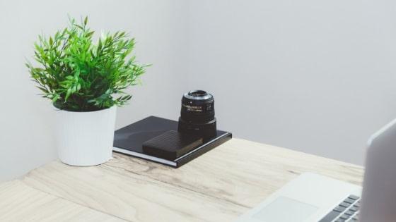 plante dépolluante à offrir à Noël / Laurie Audibert / Coach Holistique pour Entrepreneuses
