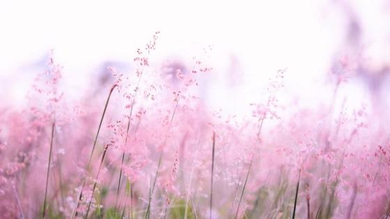 Fleurs roses / Chakra coeur _ Chakras & Business / Laurie Audibert / Coach Holistique pour Femmes Entrepreneurs