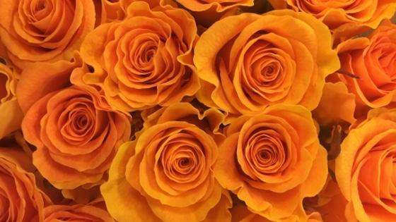 Roses oranges / Chakra sacré _ Chakras & Business / Laurie Audibert / Coach Holistique pour Entrepreneuses Spirituelles