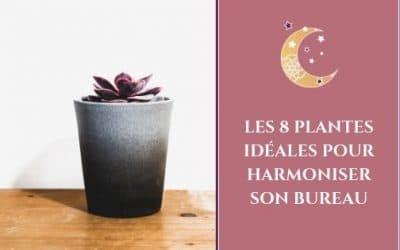 Les 8 plantes idéales pour harmoniser son bureau